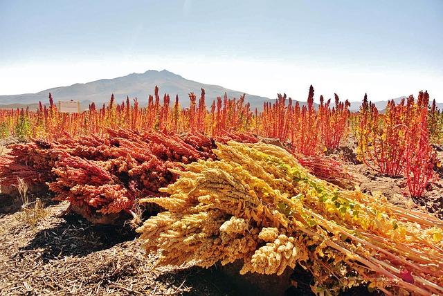 quinoa-4081567_640